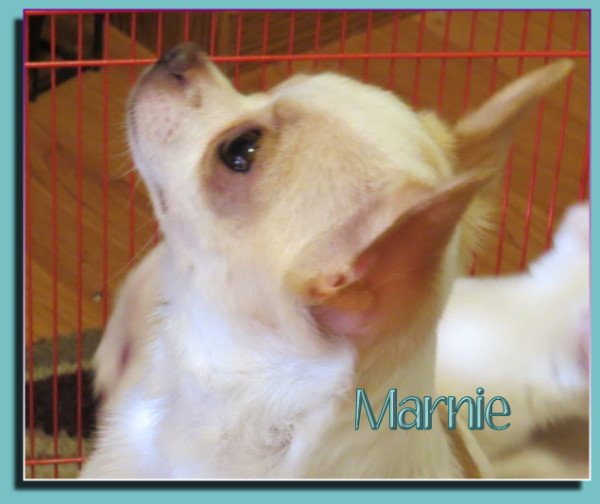 Oneway Maybe Marnie Maybe
